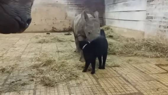Kot i nosorożec