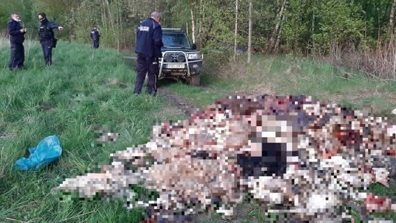 Odpady - 2 tony martwych zwierząt