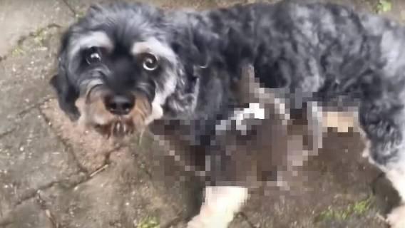 Pies wrócił z przechadzki z pasażerem na gapę