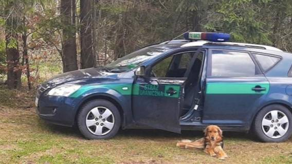 Pies dołączył do patrolu Straży Granicznej
