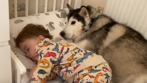 Psy czekały na narodziny dziecka. Ich reakcja na bobasa jest nieprawdopodobna, na szczęście wszystko się nagrało