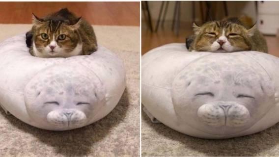 Poduszka w kształcie foki