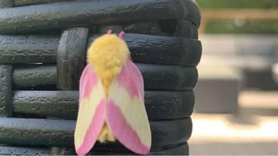 rodzaje motyli przed domem