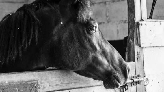 Stadnina koni w Janowie Podlaskim, skandaliczne warunki