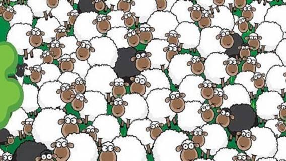Zagadka z ukrytymi owcami