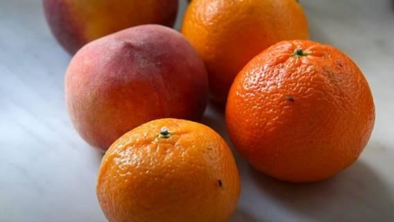 Zakupy muszki owocówki
