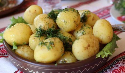 Ziemniaki - kolosalny błąd