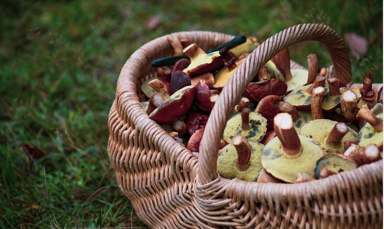 Najlepszy i niezawodny sposób na sprawdzenie, czy grzyb jest robaczywy. Już nigdy się nie pomylisz