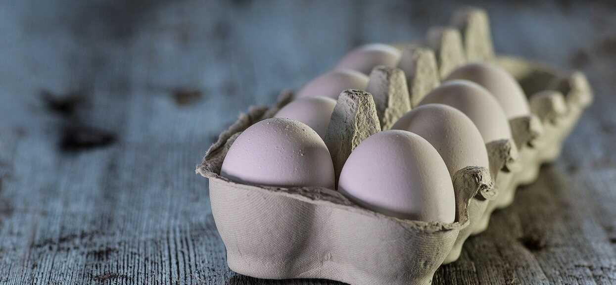 Kupiła jajka w supermarkecie. Miesiąc później stało się najbardziej niebywałe, zdjęcie zwala z nóg