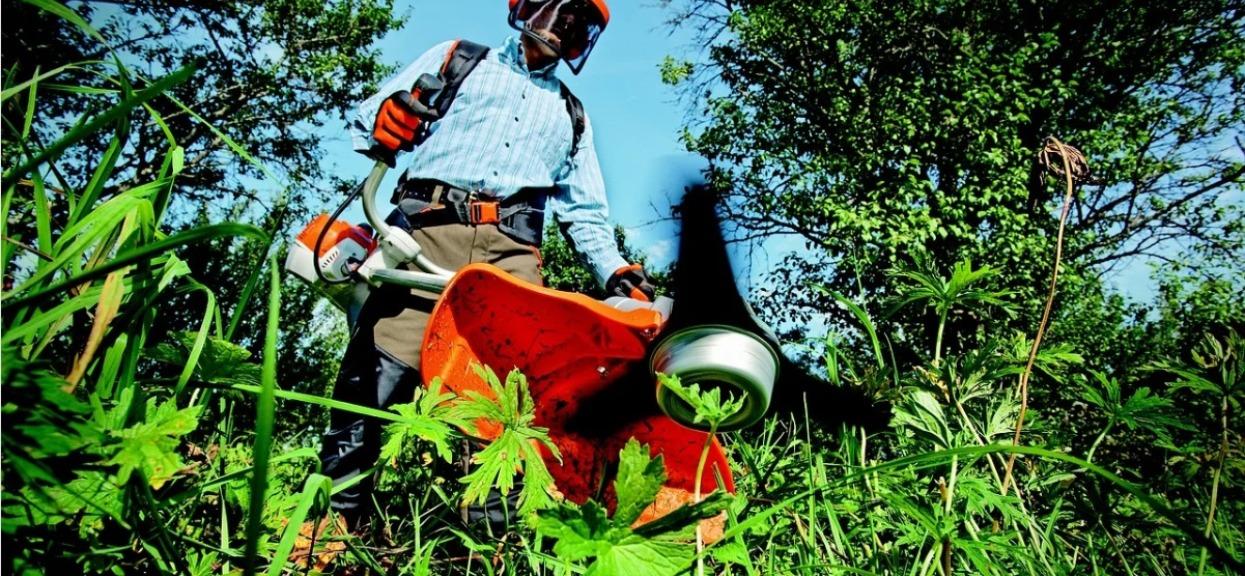 Jak pielęgnować trawnik, złote zasady
