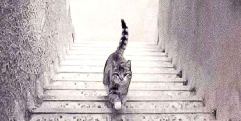 Kot schodzi ze schodów, czy się po nich wspina? Odruchowa odpowiedź ujawnia, jakim człowiekiem naprawdę jesteś