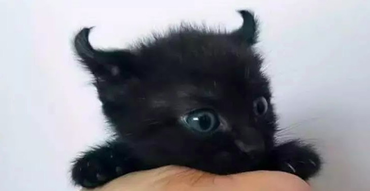 Mały kotek wygląda jak prawdziwy diabełek. Strach się bać?