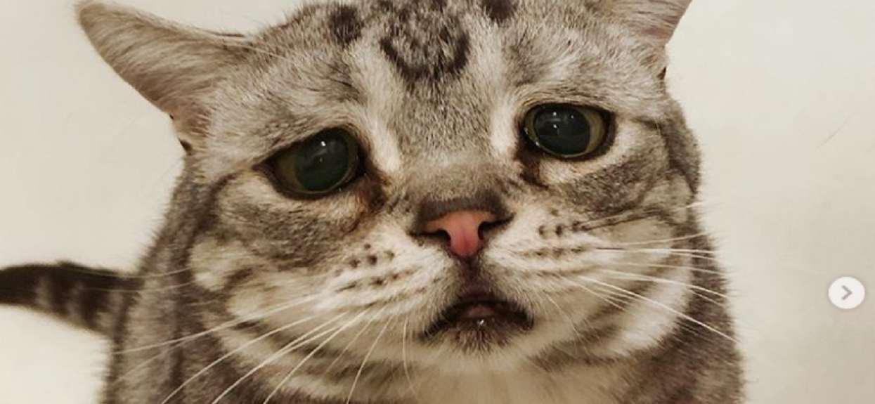 Najsmutniejszy kot świata. Słodszy niż ze Shreka?
