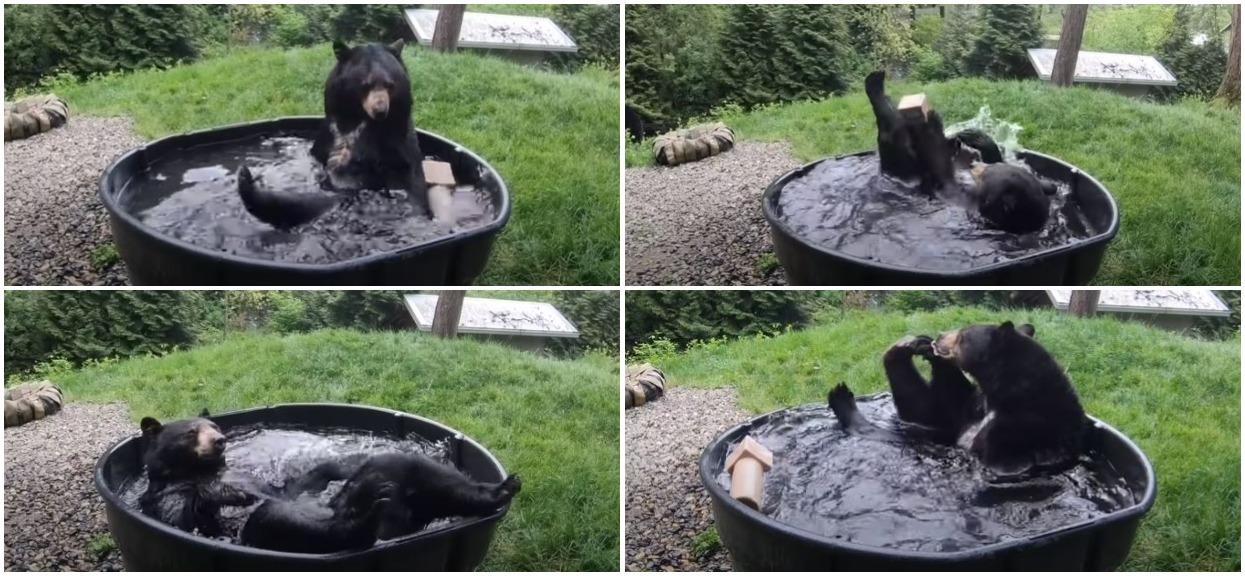 Najsłodsze, co dziś zobaczycie - wielki niedźwiedź pluska się w wannie jak rozbawione dziecko