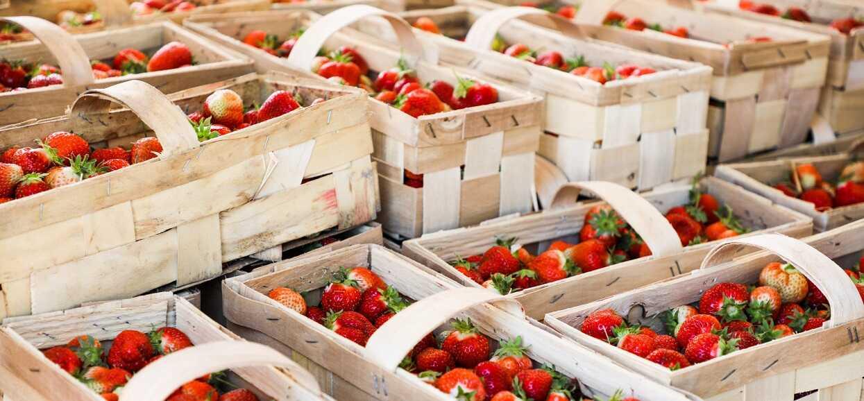 Porównano obecne ceny truskawek i ceny sprzed roku. Różnica przyprawia o zawrót głowy