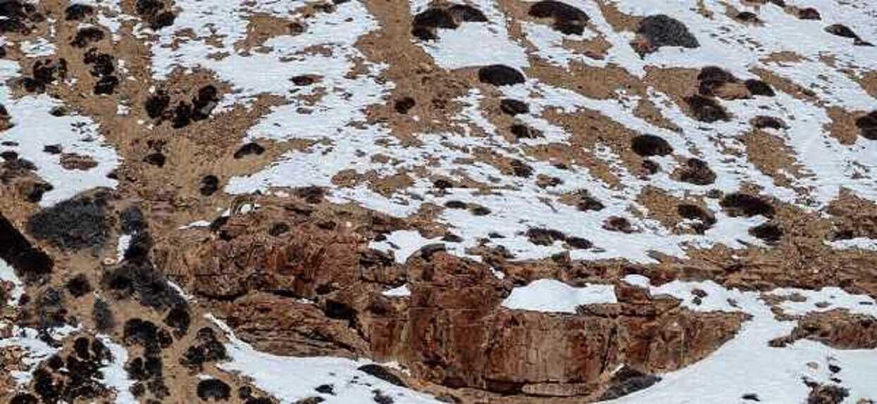 Na zdjęciu ukrywa się pantera śnieżna. Prawie nikt nie potrafi jej znaleźć