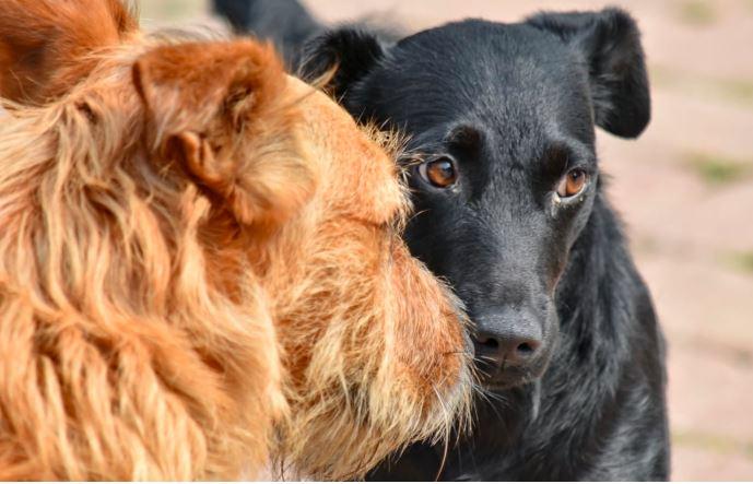 Popieracie wyższe kary za maltretowanie zwierząt?