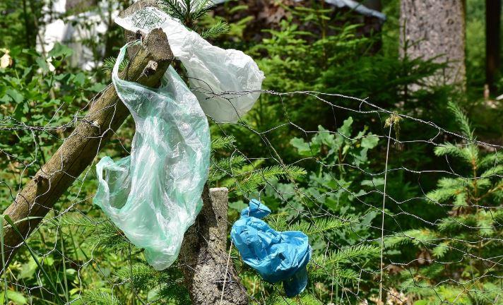 Jesteście za podniesieniem kar za zaśmiecanie lasów i łąk?