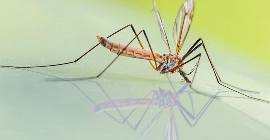 Komary - domowe środki