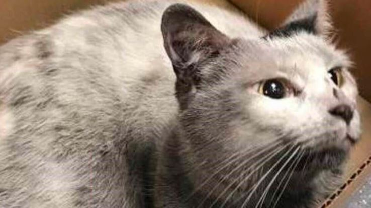 Kot wszedł na tory metra, motorniczy go nie zauważył. Niesamowite, co stało się potem