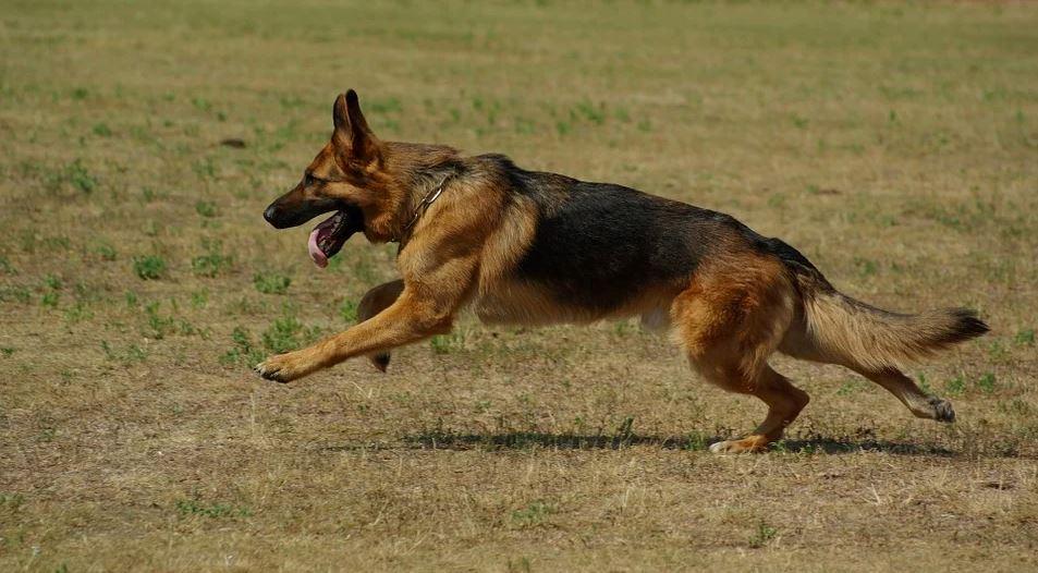 Myśliwy skazany na 3 miesiące więzienia za zastrzelenie psa. Cofnięto mu również pozwolenie na broń