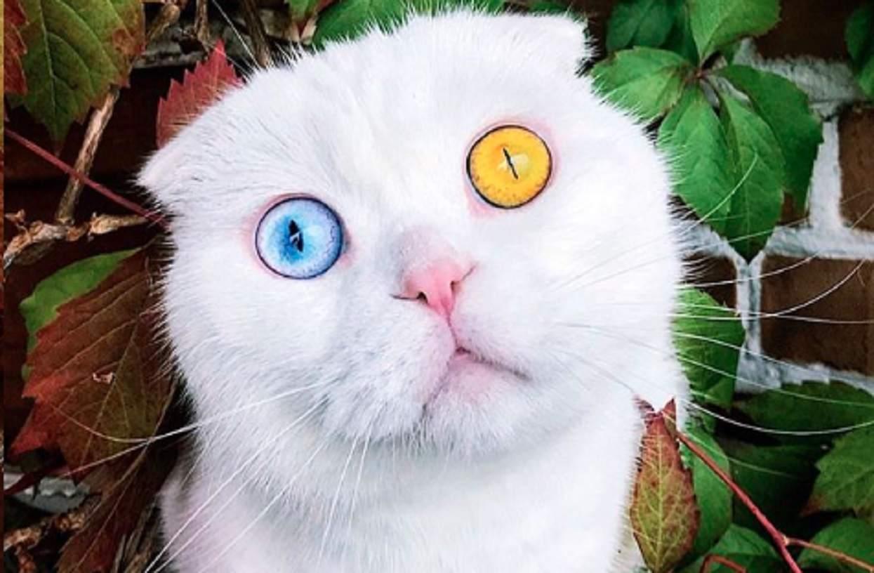 Jak wam się podobają jego oczy?