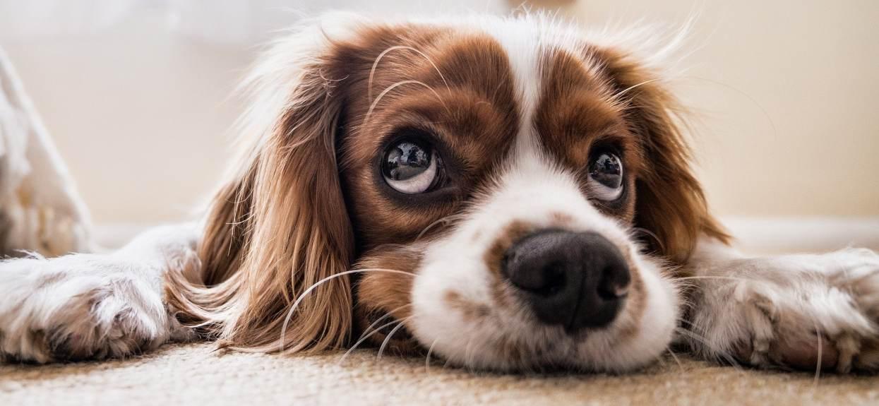 Dzisiaj jest Dzień Psa. Pochwal się zdjęciem swojego pupila