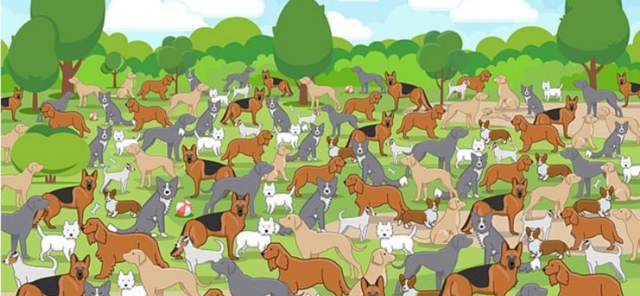 W parku pełno jest dorosłych psów. Między nimi chowa się szczeniaczek, umiesz go znaleźć?