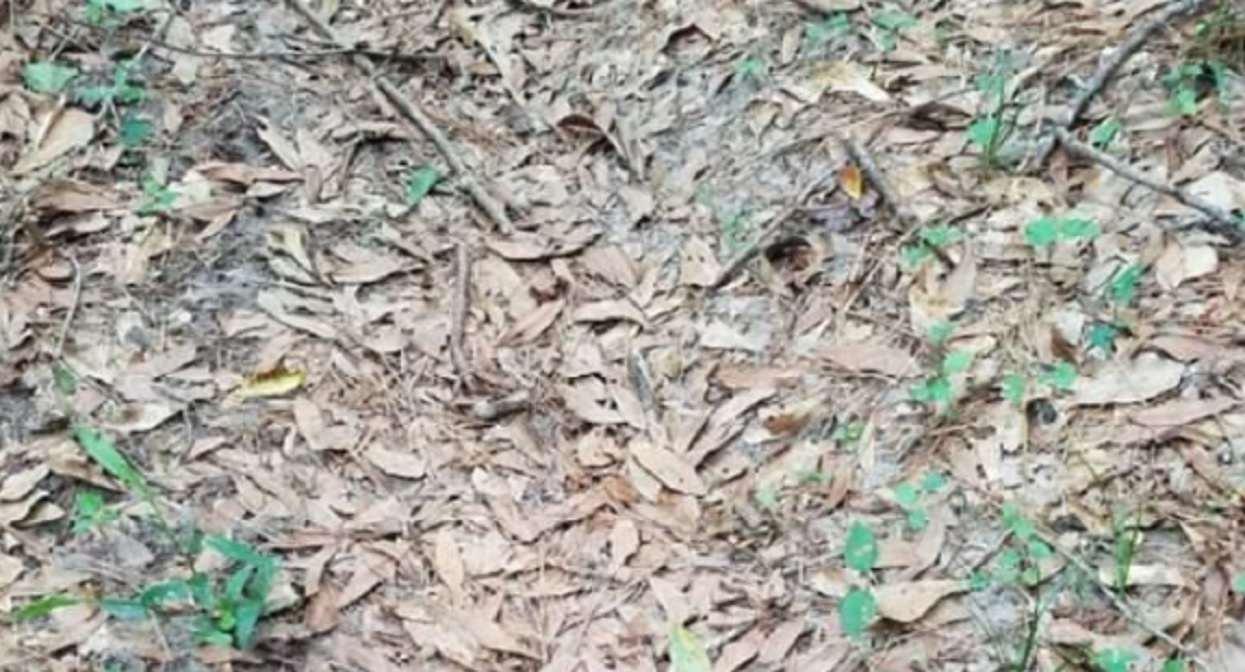 Na zdjęciu jest wąż, ale tylko 3% społeczeństwa umie go znaleźć w 10 sekund. Reszta się poddaje