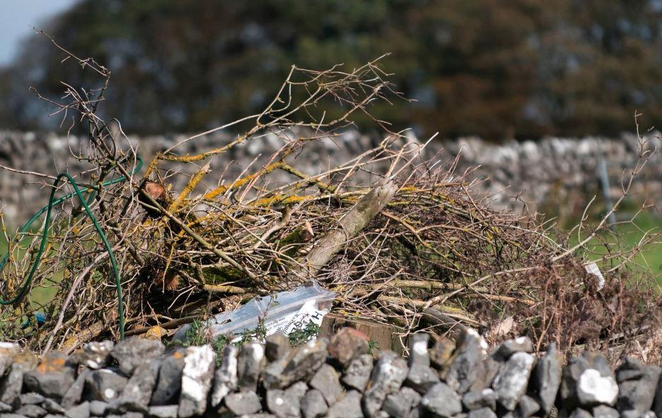 Na zdjęciu ukryła się mała sowa. Rekordzista potrafi znaleźć ją w 7 sekund, a ty?