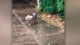 Pies zauważył podczas ulewy bezbronnego kociaka, jego reakcja powala. Właścicielka szybko wyciągnęła telefon