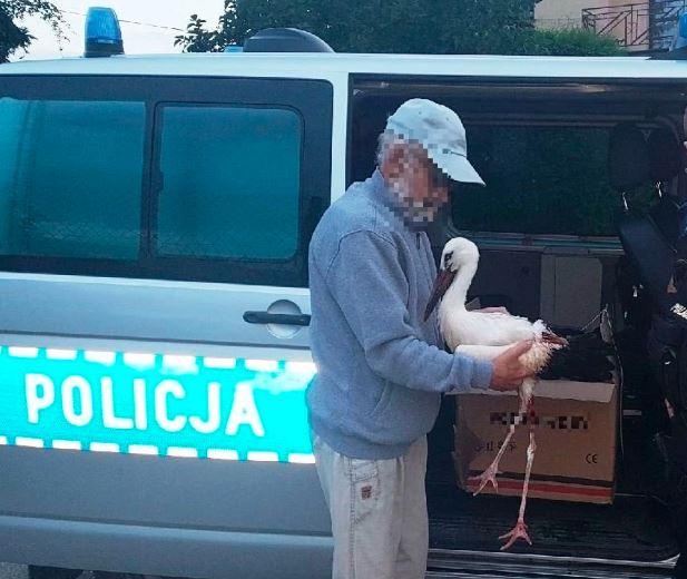 Brawa, policjanci uratowali bociana ze złamanym skrzydłem. Teraz dochodzi do siebie w ptasim azylu