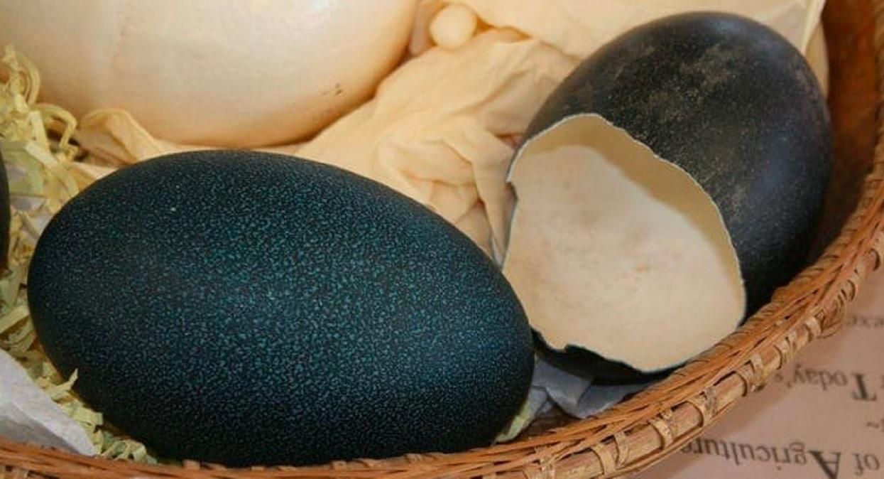 Na polu znalazła olbrzymie, czarne jajko. Gdy zobaczyła, co się z niego wykluło, zaniemówiła