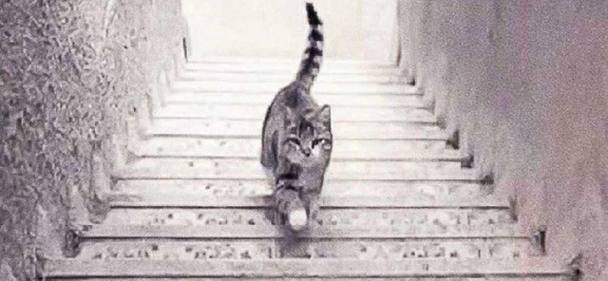 Zdjęcie podzieliło internautów. Kot idzie w górę czy w dół?
