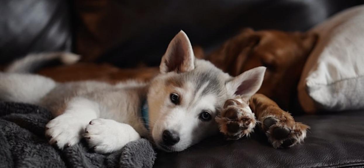 Pies znajduje się w sporym niebezpieczeństwie, należy uważać