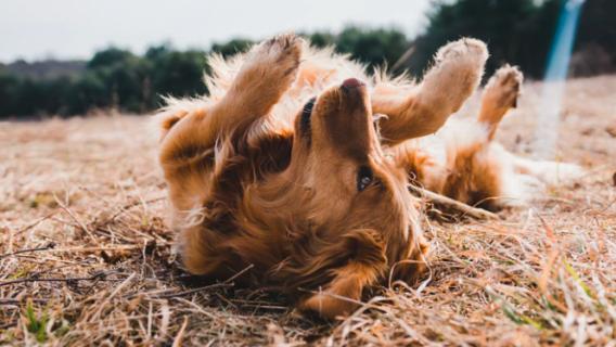 Jak obliczyć wiek psa - nowy kalkulator