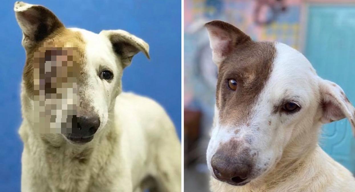Niebywały widok psa przed i po adopcji. Nic bardziej pozytywnego dzisiaj nie zobaczycie