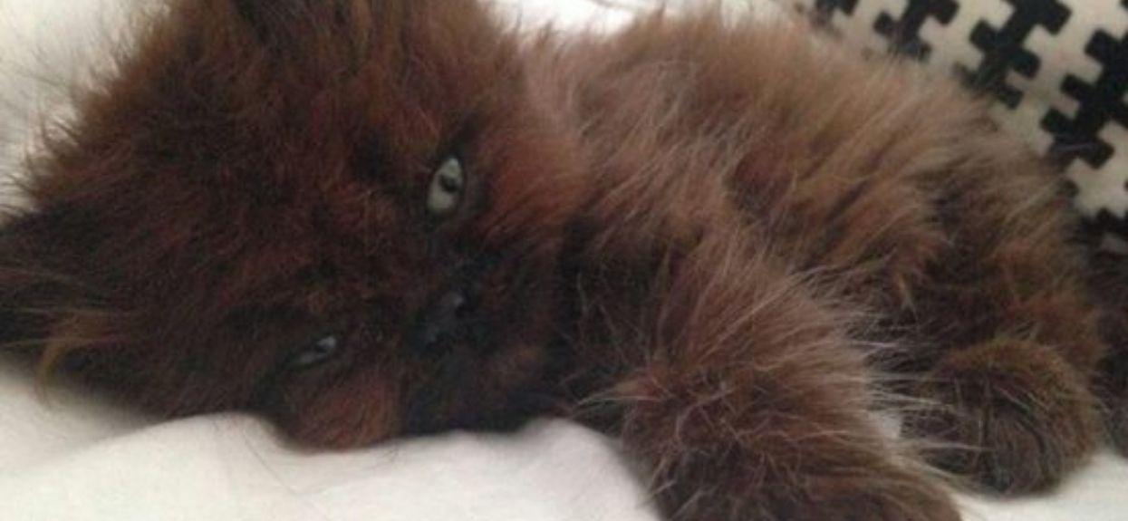 Była przekonana, że adoptowała małego, schorowanego kociaka. Po kilku miesiącach prawda ją dosłownie powaliła