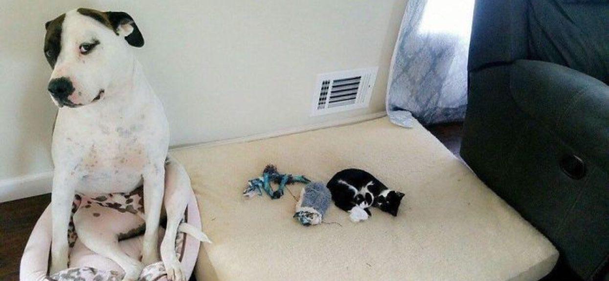 Maleńki kotek nie dał szans wielkiemu psu. Dwa niesamowite słodziaki na dobry humor