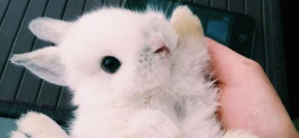 Puchaty króliczek wyciąga łapki. Kto przybije mu piątkę?