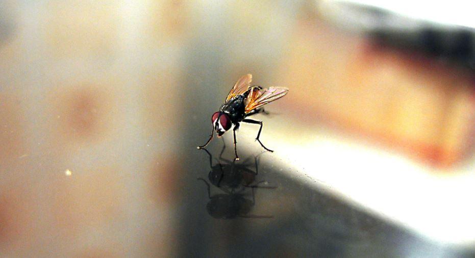 80-latek chciał zabić muchę. Pół mieszkania zdewastował nagły wybuch