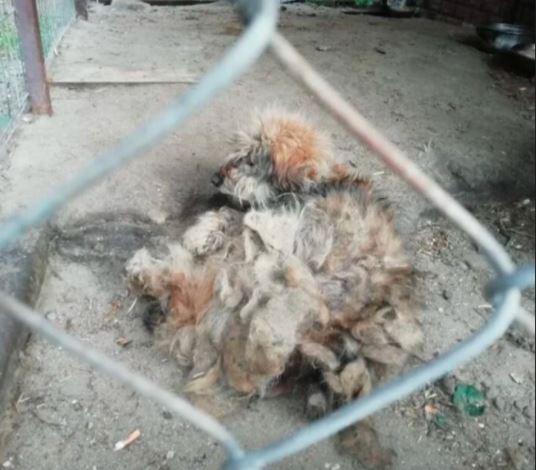 Wolontariusze cudem uratowali konającego psa. Właściciele powinni być surowo karani za takie zaniedbania?