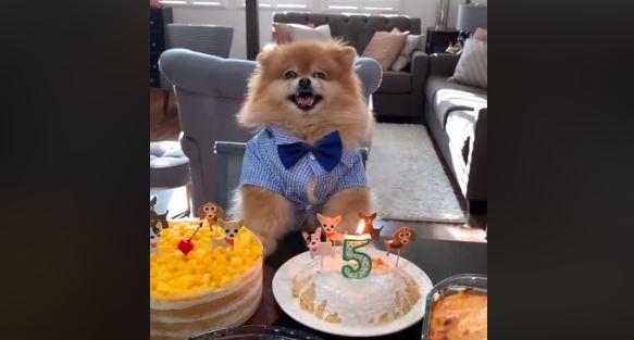 Czego życzycie solenizantowi w dniu piątych urodzin?