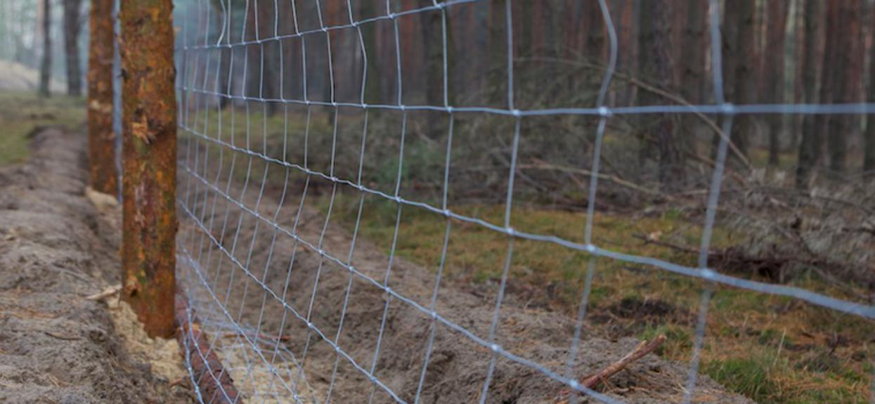 Jedno z polskich województw zostanie odgrodzone 100-kilometrowym płotem. Powód jest poważny