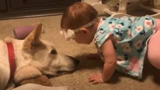 Dziewczynka dała psu kilka całusów. Nagle zwierzak się poderwał, rodzice nie mogli przewidzieć, co się stanie