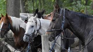Jesteście za tym, aby konie przestały być wykorzystywane do pracy nad Morskim Okiem?