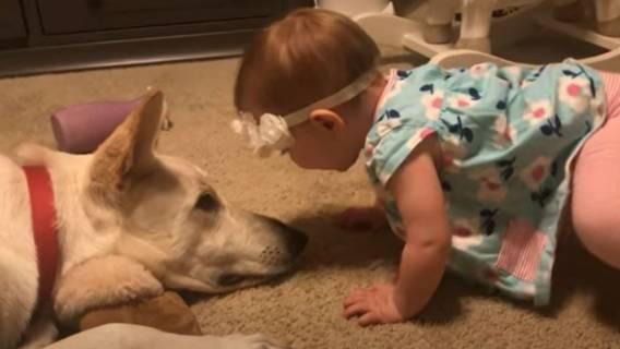 dziewczynka pies nagranie reakcja