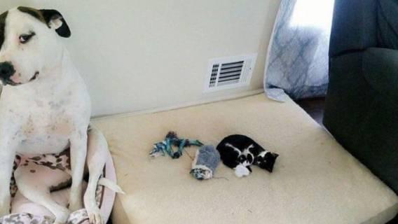 Kotek pokonał psa
