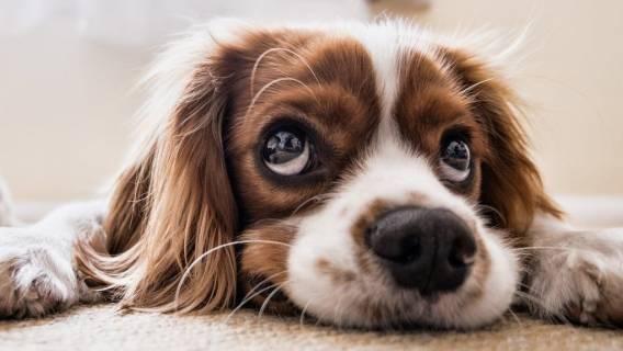 Pies będzie wiązał się z kolejnym wydatkiem