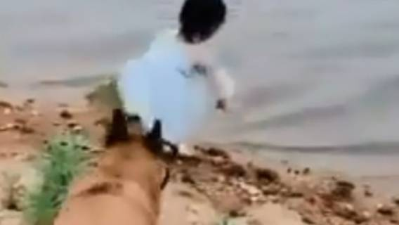 Pies zauważył dziewczynkę w pobliżu wody